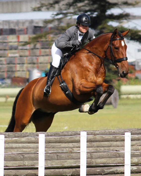 Nicola Drabble gets third in Working Hunter Jumps